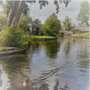 הולנד עם ילדים- שילוב כפר נופש ובית חווה